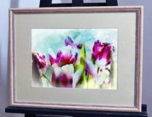 цветущие розовые тюльпаны